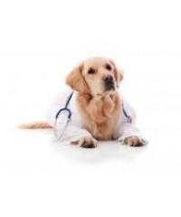 лекарства и витамины для собак и кошек